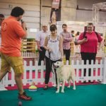 PetExpo 2019 București: Evenimente pentru animale de companie
