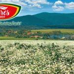 Fares, lider pe piața ceaiurilor și a remediilor din plante medicinale