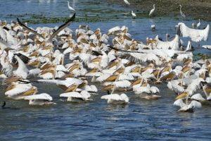 Vacanta de Paste si 1 Mai in Delta Dunarii