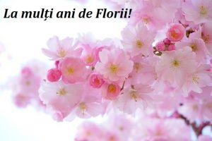 Mesaje de Florii pentru prieteni. Mesaje de Florii pentru familie. Felicitari de Florii pentru prieteni. Felicitari de Florii pentru familie