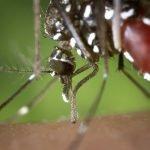 Avertismentul Ministerului Sănătății: Cum poți preveni infecția cu virusul West Nile