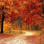 Marșul pentru Păduri 2019 are loc pe 3 noiembrie