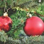 Unde putem recicla brazii naturali de Crăciun?