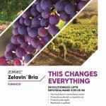 Cele mai bune fungicide pentru combaterea făinării și manei viței de vie
