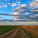 Plăți APIA 2020. 1,023 miliarde de euro pentru fermieri
