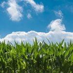Corteva Agriscience: Ameliorarea avansată oferă o mai bună rezistență la schimbările climatice