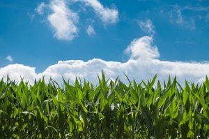 Agricultura durabila - Corteva Agriscience