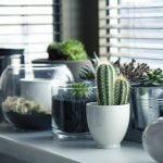 Cele mai bine vândute plante de apartament