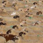 Ajutor de stat pentru crescătorii de animale
