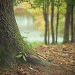 SUMAL 2.0, noul sistem de monitorizare a pădurilor
