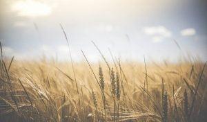 Renta viagera agricola