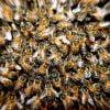 Fonduri pentru crescatorii de albine