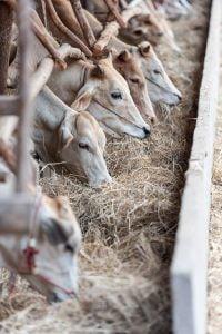 Fonduri europene pentru cresterea animalelor