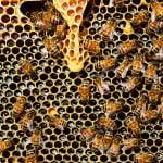 Finanţări sectorul apicol. Anunţul făcut de Ministerul Agriculturii