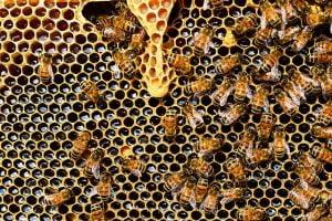 Finantari sectorul apicol