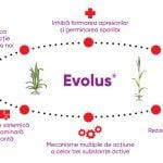 EVOLUS®, cel mai popular fungicid sistemic