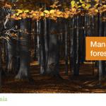 Proiectul Managementul forestier a ajuns la a doua ediţie