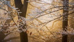 Avertisment meteo: Ger cumplit in Romania