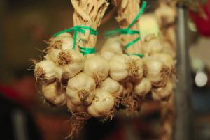 Programul de sustinere a productiei de usturoi