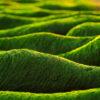 Biocombustibili din alge